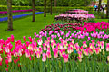 Keukenhof -  Garden of Europe  - pictures