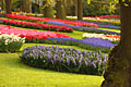 Photos - Keukenhof -  Garden of Europe