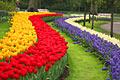 Keukenhof -  Garden of Europe - photo travels