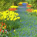 Keukenhof -  Garden of Europe - photo stock