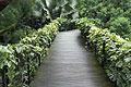 Singapore Botanic Gardens - photo travels