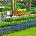 Images - Keukenhof -  Garden of Europe