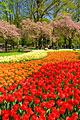 Keukenhof -  Garden of Europe - travels