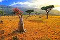 Socotra - photos - Yemen