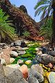 Socotra - photography