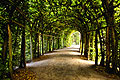 Park in Sanssouci (summer palace of Frederick the Great) in Potsdam - photo stock