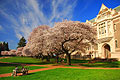 University of Washington in Seattle - photo gallery
