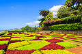 Botanical garden in Funchal, Madeira  - travels