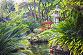 Botanical garden in Funchal, Madeira  - photo travels