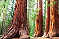 Sequoia National Park - travels