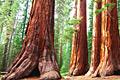Sequoia National Park - reizen