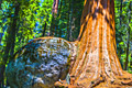 Sequoia National Park - fotoreizen