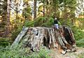 Foto's van vakantie - Sequoia National Park