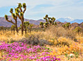 Joshua Tree National Park - photos