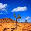 Joshua Tree National Park  - pictures