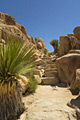 Our tours - Joshua Tree National Park
