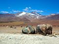 Altiplano (Bolivian Plateau) - photos