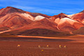 Altiplano (Bolivian Plateau)  - pictures