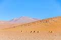 Salvador Dalí Desert  - pictures