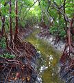 Everglades National Park (Florida) - photos