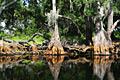 Everglades National Park - travels