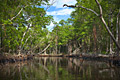 Everglades National Park  - pictures