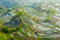 Rice terraces of Yuanyang, Yunnan - photos