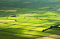 Farm fields on Terceira Island (Azores)  - pictures